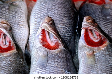 Fresh fish in local market