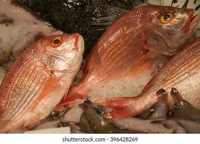 Fresh fish in market Pescheria