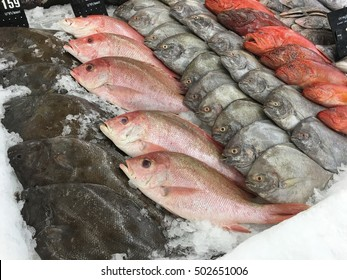 Fresh fish in the fresh market or supermarket cooled fish Fresh ice cooled hakes on a fish