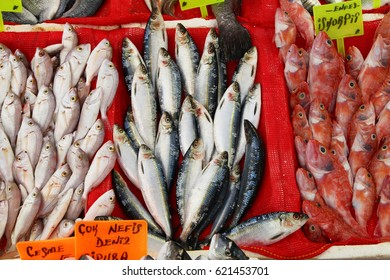 Fresh fish on the counter in the market (Nameplates: Bream, Scorpaena Porcus)