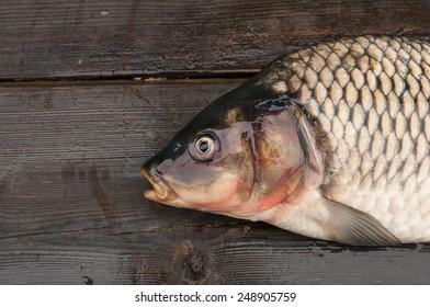 Fresh fish on a cutting board. Carp mirror.