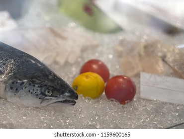 A fresh fish on the dry ice in the showcase