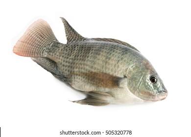 Fresh fish on a white background (Nile tilapia, Mango fish, Nilotica)