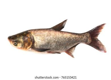 Fresh fish on a white background