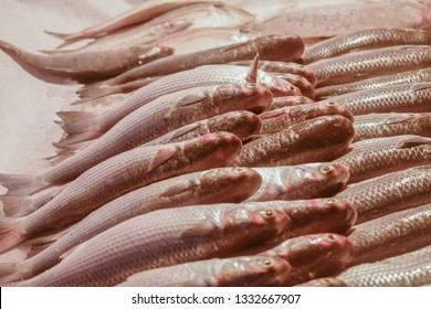 Fresh fish for sale at the fish market in Bandar Abbas, Iran.