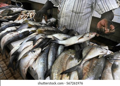 Fresh fish for sale in Nadi fish market in Viti levu Island, Fiji. Fisheries are the third largest natural resource of Fiji Islands.