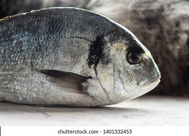 Fresh fish Sparus aurata profile view. Raw dorada fish with on white table