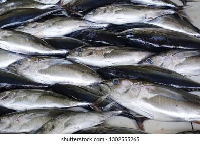 Fresh fish tuna in the market