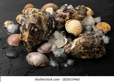 Fresh fisherman catch with oysters and mussels on ice. Raw molluscs, shellfish on black background closeup