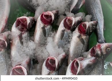 Fresh fishes at fish market - (bass fish)