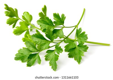 fresh flat parsley isolated on white background