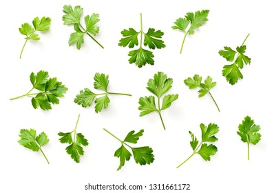 fresh flat parsley isolated on white background, top view