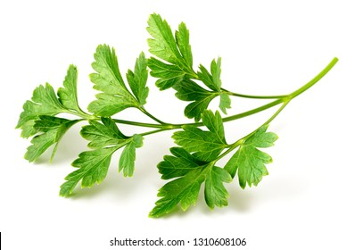 fresh flat-leaf parsley herb isolated on white background