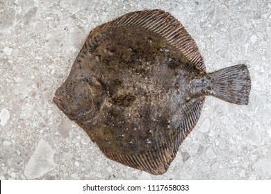 fresh flounder view from above