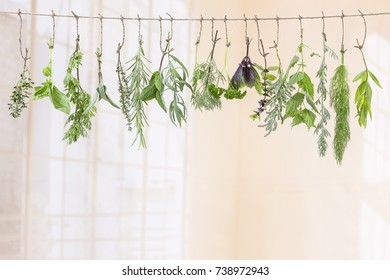 fresh flovouring and medicinal plants and herbs hanging on a string, on indoor backgroung