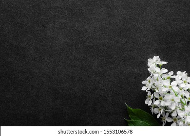 Fresh flowers branch of white bird cherry on dark background. Condolence card. Empty place for emotional, sentimental text, quote or sayings.