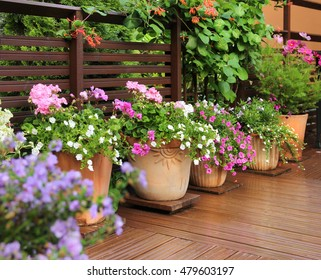 Fresh flowers in clay pots on wooden summer terrace