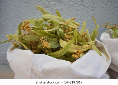 Fresh flowers and leaves of linden.  herbal medicine, Cup of healthy linden tea with honey. Dried linden flowers