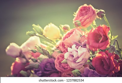 Fresh flowers of Lisianthus close-up for your holiday floral decoration. Beautiful bouquet of Eustoma, gentle petals in pastel rose-colored and magenta tones at blur green background.