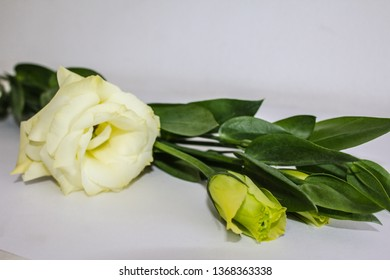 Fresh flowers of Lisianthus on grey background. Beautiful bouquet of Eustoma in vase on blur, grey background. Flower background with copy space.