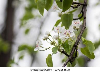 fresh flowers on tree