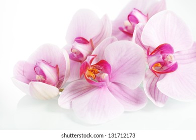 Fresh flowers orchids on white background.