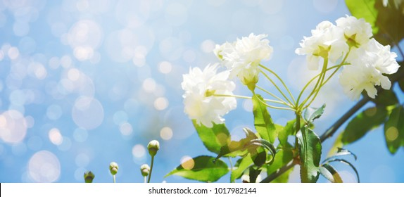 Fresh flowers. Spring background.