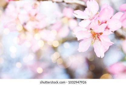 Fresh flowers. Spring background.
