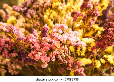 Fresh flowers still life - Stock Image
