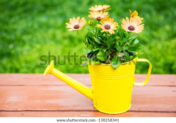Fresh flowers in a watering can flower pot.