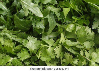 Fresh foliage of green herbs, coriander leaves, parsley leaves, rucola, summer texture, macro