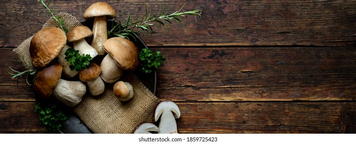 Fresh forest mushrooms /Boletus edulis (king bolete) / penny bun / porcini / mushroom in an old bowl / plate and rosemary parsley herbs on the wooden dark brown table, top view background banner