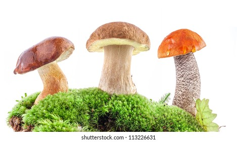 Fresh forest mushrooms (boletus) in a forest scene and white backdrop