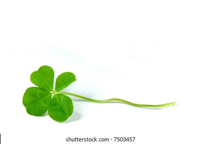 Fresh four leaf clover isolated on white - symbol of holiday St Patrick's Day