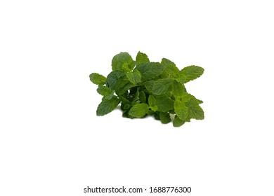 Fresh fragrant mint on white background