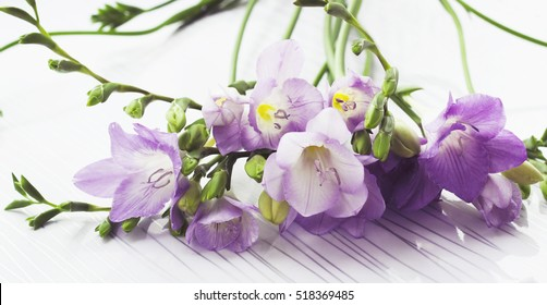 Fresh freesia flowers on a white background, free space for text