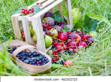Fresh fruit and berries on a background of nature. Peaches, plums, apples, raspberries, currants, gooseberries, redcurrants.