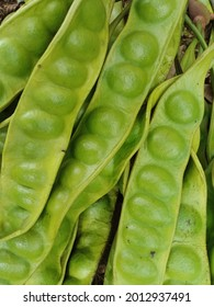 Fresh fruit commonly called petai fruit with a distinctive aroma