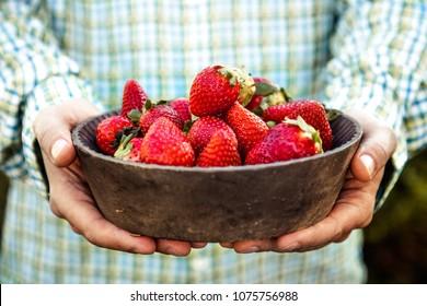 Fresh fruit. Farmer with bowl of strawberries. Fruit basket.