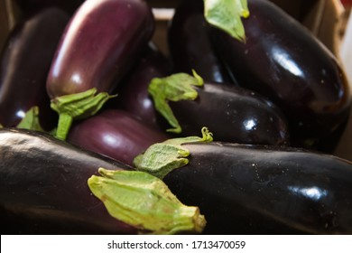 Fresh fruits and vegetables. Purple eggplant is sold in the market
