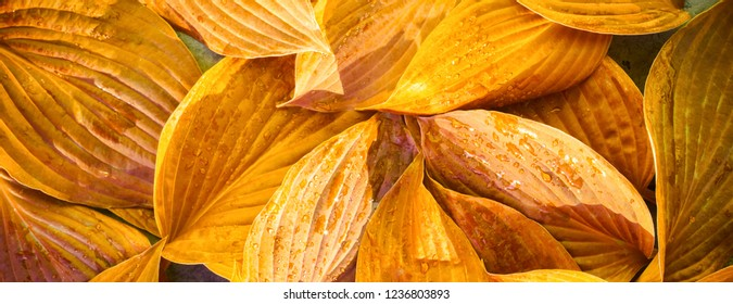 Fresh garden leaves bell organic gardening background concept crop ecology summer autumn spring Leaf texture green natural macro layout closeup toned