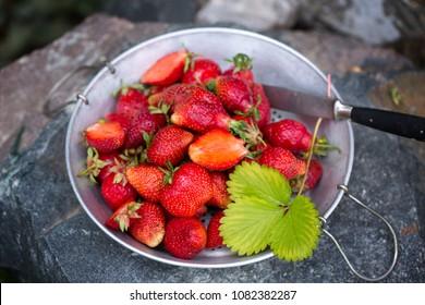 Fresh garden strawberries in an old sieve