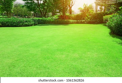 Fresh gardening green Bermuda grass smooth lawn with curve form of bush, trees on the background in the house's garden  under morning sunlight - Shutterstock ID 1061362826