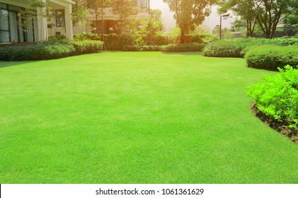 Fresh gardening green Burmuda grass smooth lawn with curve form of bush, trees on the background in the house's garden  under morning sunlight