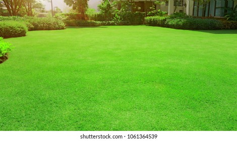 Fresh gardening green manila grass smooth lawn with curve form of bush, trees on the background in the house's garden  under morning sunlight