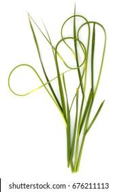 Fresh garlic scapes isolated on white background.