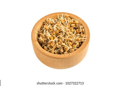 Fresh germinated wheat seeds in wooden bowl isolated on white background. Source of vitamins and micronutrient, has general strengthening, immunostimulating, antibacterial, antioxidant properties