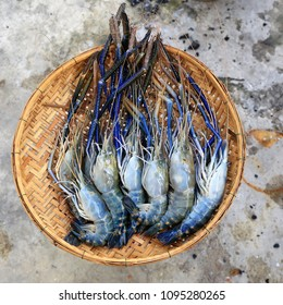 Fresh giant freshwater prawn on bamboo basket hand made.top view