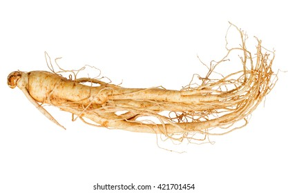 fresh ginseng root isolated on  white background