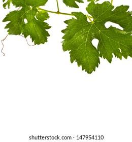 fresh grape leaves isolated on white background